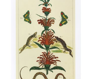 Plant Butterfly Snake Print Book Plate SALE Buy 3, get 1 Free