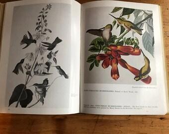 1952 Audubon's Butterflies Moths and other studies hardcover