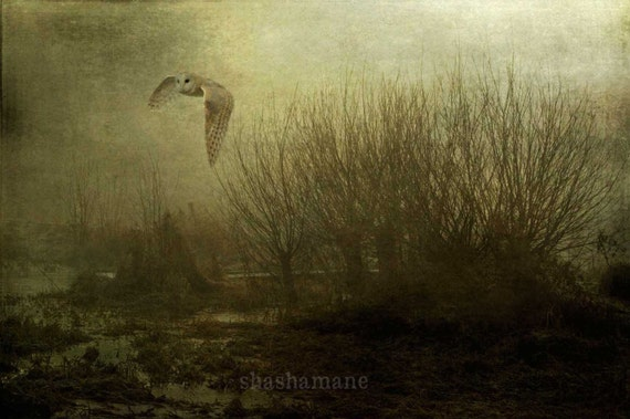 Midnight owl, gothic, Hedwig 5x7 art photo print, halloween, spooky