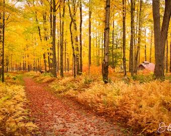 A Path through the Ferns  in Fall Print