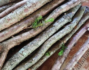 Box of Yew Tree Branches