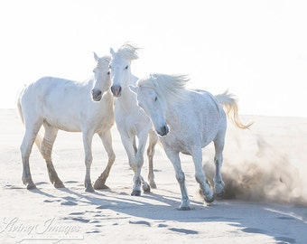 Three Play on the Beach - Fine Art Horse Photograph - Horse - Camargue - Fine Art Print