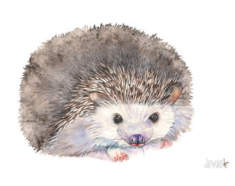 Hedgehog print of watercolour painting, H17417, A3 size print, Hedgehog watercolour painting print, Hedgehog watercolor painting print