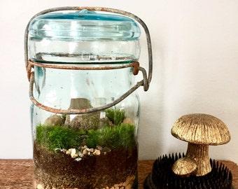 Moss terrarium in a vintage Ball jar.