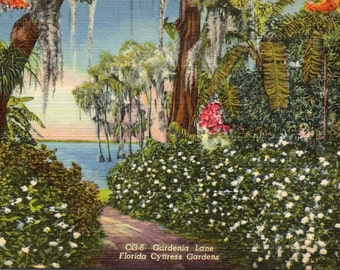 Cypress Gardens, Florida, Gardenia Lane - Linen Postcard - Postcard - Unused (C1)