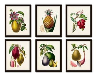 French Fruit Print Set No. 6, Giclee, Wall Art, Botanical Art, Print Sets, Vintage Botanical, Tropical Fruit Print, Fruit Print, Kitchen Art