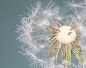 Flower Photography, Dandelion Picture, Wall Decor, Wall Art, Fine Art Print, Floral Fine Art