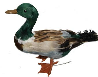 1 pc 13 Inch Feather Mallard (Tarrence)