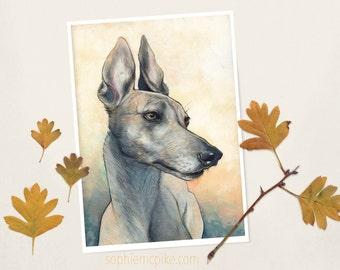 All Ears A4 Print Greyhound