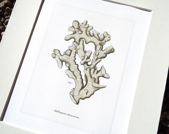 Neutral Sea Coral Print 6 Naturalist Collection on Watercolor Paper