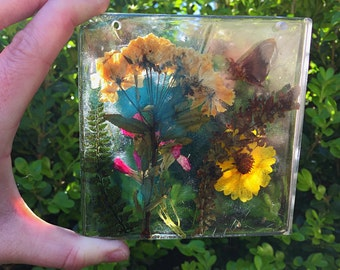 Preserved Nature Wall Hanging/sun Catcher