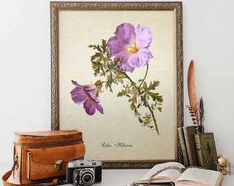 Botanical Print, Hibiscus Print, Flower Print, Lilac Hibiscus Print, Home Decor, Hibiscus Botanical Art Print, Decorative Reproduction FL050