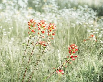Wildflower Landscape Photograph, Indian Paintbrush Wildflower Fine Art Print or Canvas Wrap