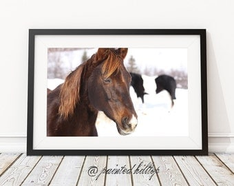 Horse Photography: Lady Glory - Unframed 10x8 Photograph
