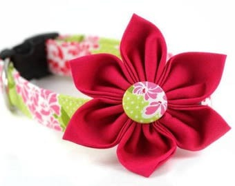 Gingerella in Lime Collar and Flower