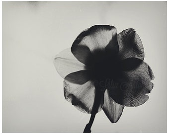 Black and White Flower Picture Fine art Photography Daffodils Art Minimalist Nature Photography Balck and White Botanical Picture Modern Art