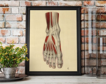 Anatomical Foot Art Print