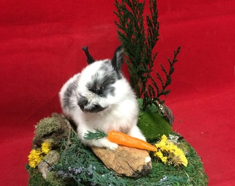 Very Small Taxidermy Baby Bunny Rabbit Display-all natural//bird-squirrel-mouse