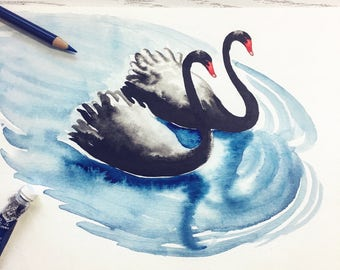 Two Black Swans, Watercolour Painting Archival Print