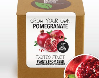 Grow Your Own Pomegranate Fruit Plant Kit