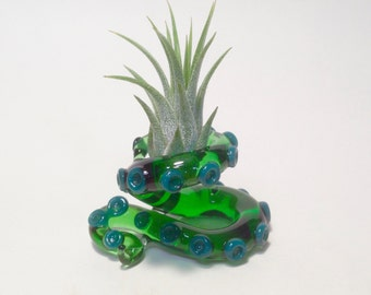 Table top Green tentacle airplant terrarium 2.5 x 1.75 x 1.5 in