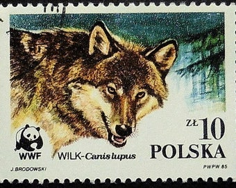 Gray wolf, Canis lupus -Handmade Framed Postage Stamp Art 21417AM