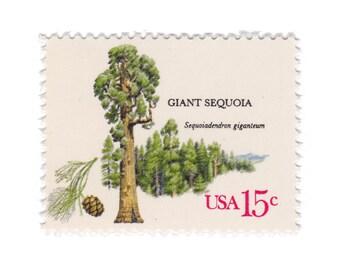 10 Unused Vintage Postage Stamps - 1978 15c American Trees Series - Giant Sequoia - No. 1764