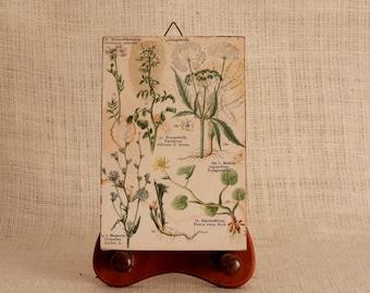 Botanical Print , Vintage Wall Art, Antique botanical, Vintage Print, Flower print, art print, kitchen wall art, wall decor vintage art