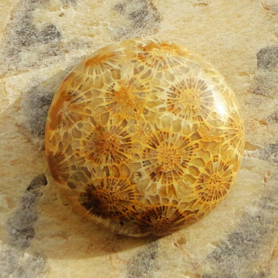 Basket Weaving Supplies Connecticut : Excellent ct round fossil coral cabochon for jewelry