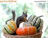 Autumn Squirrel Art, Fall Decor, Woodland Animals, Funny Photographs, Animal Prints, Autumn Harvest, Pumpkins