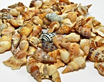 250 Sea Shells, Shells For Crafts, Craft shells, SeaShells, Beach Wedding, Scrapbooking, Jewelry, Crafting Shells, Tiny Shells, Shells