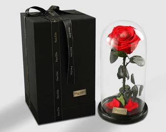 Beauty & the Beast - Preserved Rose in Glass Dome