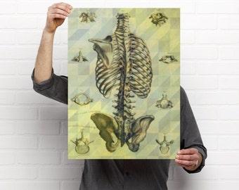 Vintage Spine Anatomy Print