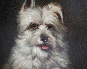 Portrait of a West-highland Terrier