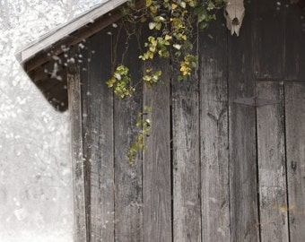 Barn Photography, Old Shed With Skull, Home Decor, Wall Art, Wall Decor, Photograph, Print, Fine Art Photography