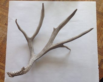 Available for Your Customization - X-Large Antler Shed