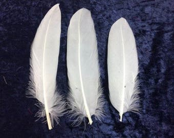 25 White Goose Feathers Craft Goose Feathers Unique Feathers Wedding Feathers Hat Embellishment