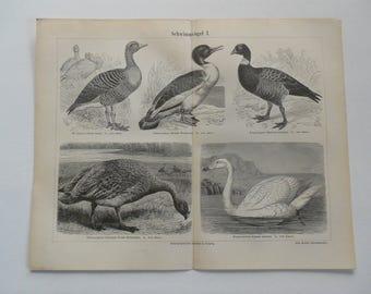 """Chromolithograph, """"Birds I"""""""