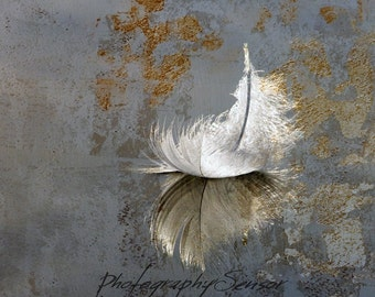Aerobatics, Square photo, Feather falling on the ground, Shades of White and blue-gray, Print on Watercolor paper, Soft atmosphere, Nursery.