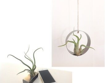 Air plant holder duo