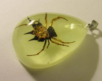 """Teardrop Pendant of Real Spider Encased in Resin, 1 1/2"""""""