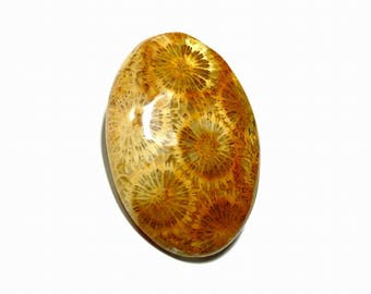 see fossil coral cabochon with beautiful patterns are available in 5 usd 7.16 gm GM332