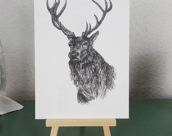 Red Deer Stag Art Print of Pen and Ink illustration; British Wildlife series