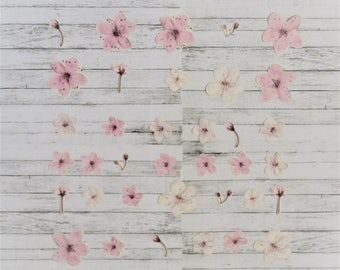 36 Real Flower Stickers (Cherry Blossom)