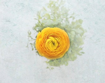 Styled Stock Photography. Yellow Ranunculus Flower. Instant Digital Download. 15in x 12in 300dpi. For personal & commercial use. 5 files.