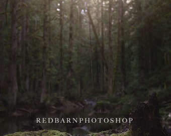 Forest Digital Background