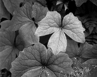 Dewdrops / landscape black and white photograph, fine art, wall art print, landscape photo, b&w photography, nature wall decor