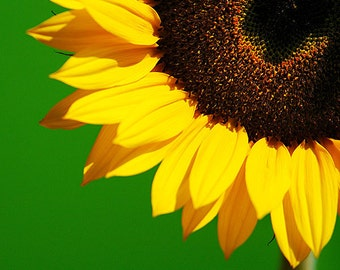 Sunny Sunflower II - Photographic Print - Photograph - Photo - Fine Art - Seeds - Petals - Sunshine - close detail - The London Print Shop