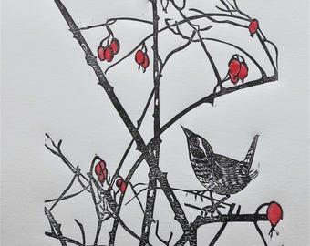 Wren among the thorns