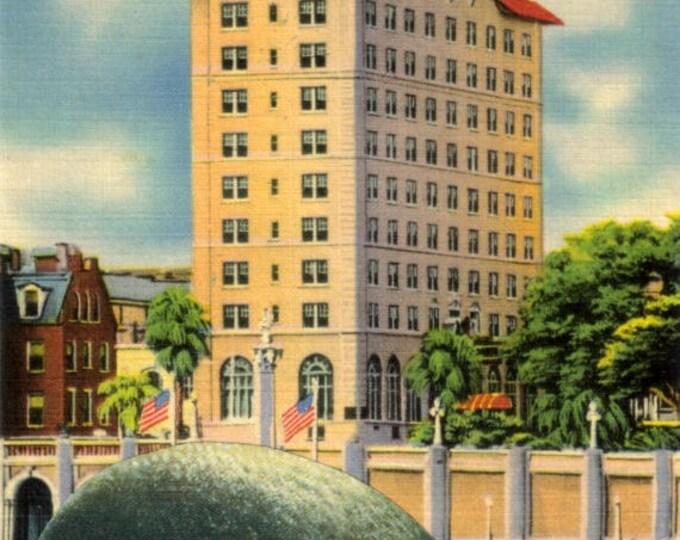 Whale Art, Florida Postcard Artwork